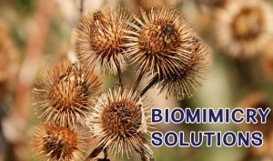 biomimicry solutions