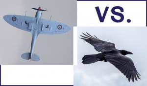 war of wingalings biomimicry