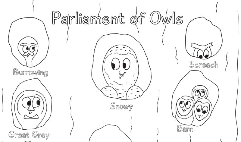 jan pic parliament owls