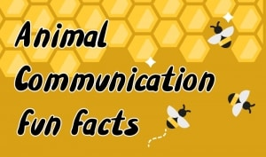 animal communication fun facts