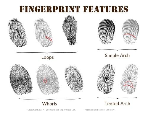 fingerprint features