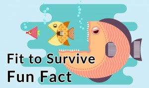 fit to survive fun facts
