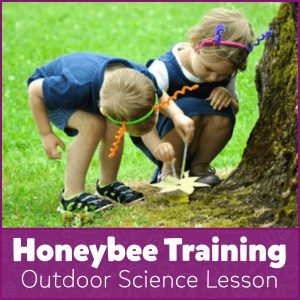 Honeybee Training Outdoor Science Lesson