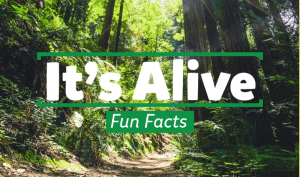 It's Alive Fun Facts