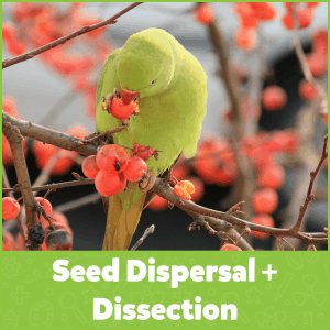 Seed Dispersal + Dissection