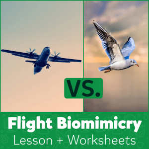 Flight Biomimicry Lesson + Worksheets