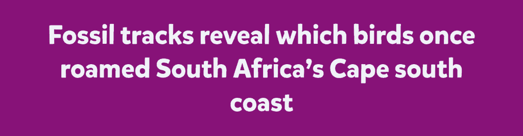Fossil tracks reveal which birds once roamed South Africa's Cape south coast
