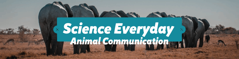 Science Everyday - Animal Communication