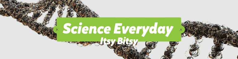 Science Everyday Itsy Bitsy