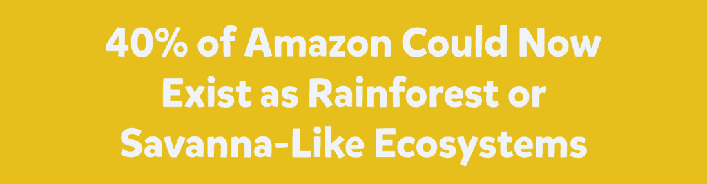 40% of Amazon Could Now Exists as Rainforest or Savanna- Like Ecosystems