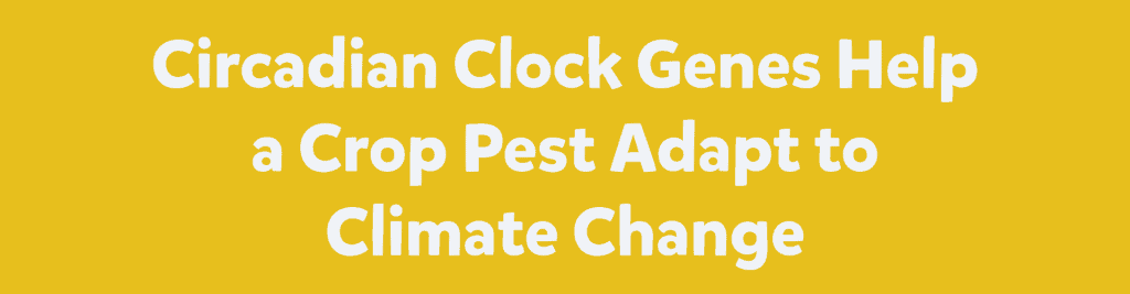 Circadian Clock Genes Help a Crop Pest Adapt to Climate Change