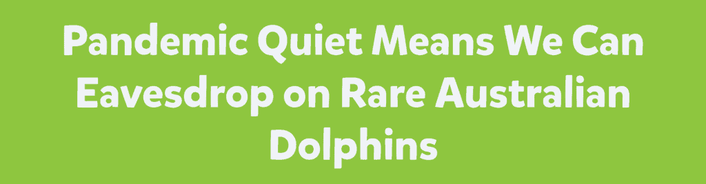 Pandemic Quiet Means We Can Eavesdrop on Rare Australian Dolphins