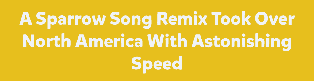 A Sparrow Song Remix Took Over North America With Astonishing Speed