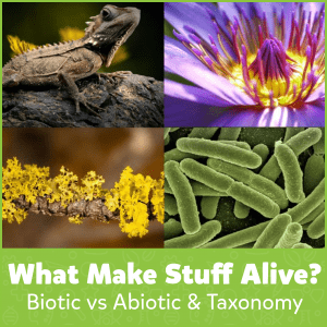 What Makes Stuff Alive? Biotic vs Abiotic & Taxonomy